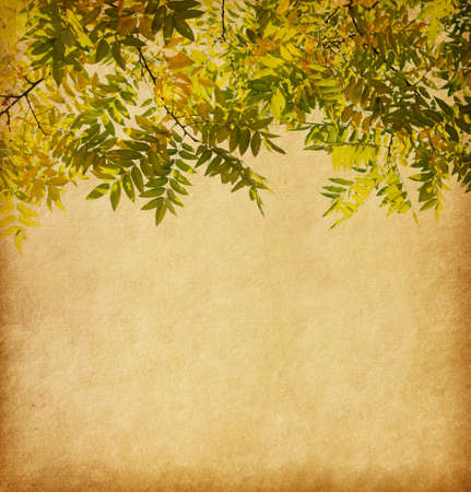 Aged paper texture with  branch of autumn leaves. Pagoda Tree photo