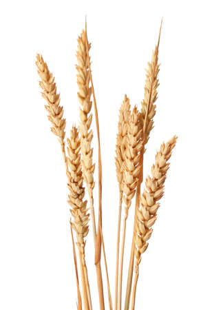 wheat isolated: Wheat ears isolated on white backgrounds Stock Photo