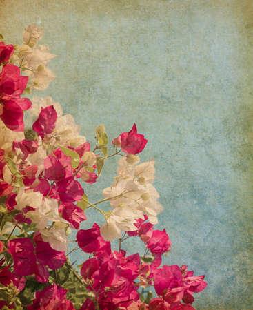 Bush of Bougainvillea flowers   in retro style photo