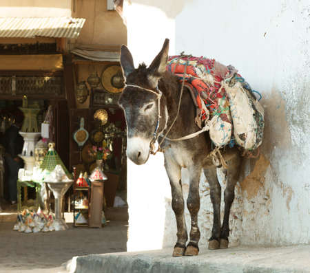 fez: Donkey  on the street of the medina in Fez, MoroccoIn the background  shopping street Stock Photo