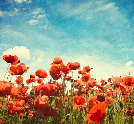 campo de flores: Campo de amapolas contra el cielo azul con nubes blancas. A�adido textura de papel Foto de archivo