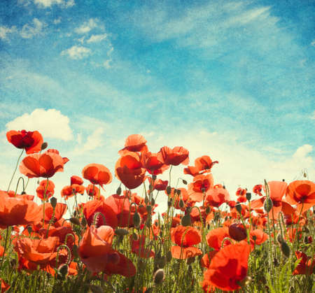 red floral: Field of poppies   against blue sky with white clouds. Added paper texture