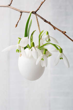 Bunch of snowdrops in  egg shell on white  wooden board.    Shallow depth of field,  focus on near flowers. Easter decor