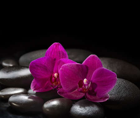 life style: Two orchids laying on black stones. Spa concept.  LaStone Therapy Stock Photo