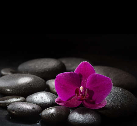 lastone: Purple orchid  laying on wet black  stones. Spa concept.  LaStone Therapy