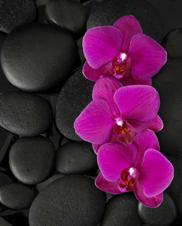 lastone: Three orchids lying on black stones. Viewed from above. Spa concept. LaStone Therapy