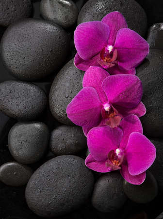 Three purple orchids  lying on wet black stones.Viewed from above.  Spa concept. LaStone Therapy