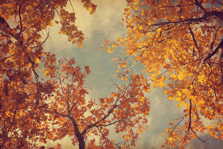 fade: Autumn leaves of oak on the sky background.  Photo in retro style. Added paper texture. Toned image.
