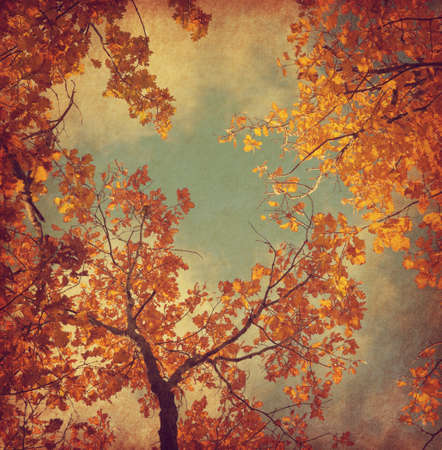 grunge tree: Autumn leaves of oak on the sky background.  Photo in retro style. Added paper texture. Toned image.