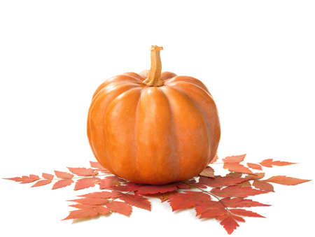 dynia: Pumpkin with dry autumn leaves isolated on white background.