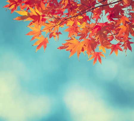 feuilles arbres: Automne coloré feuilles sur fond de ciel bleu
