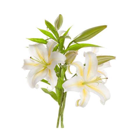 ramo de flores: Montón Lirios blancos 'aislado en un fondo blanco Foto de archivo