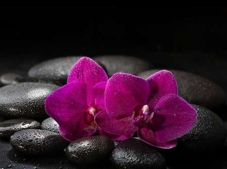 black stones: Two purple orchids  on wet black stones. Spa concept. LaStone Therapy
