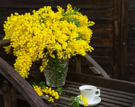 bunch of flowers: Mimosas yellow spring flowers on the background of old brown wall Stock Photo