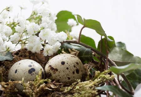 huevos de codorniz: Dos huevos de codorniz en el nido en la mesa de madera. Decoración de Pascua