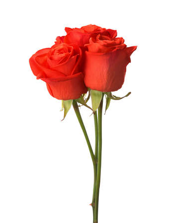 vermeil: Three bright red roses isolated on white