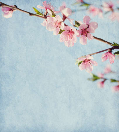 material flower: Old paper texture with peach blossom. Stock Photo