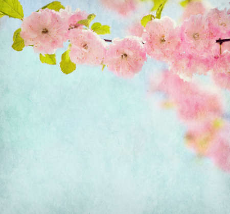 Old paper texture  with beautiful pink flowers  Flowering almond .