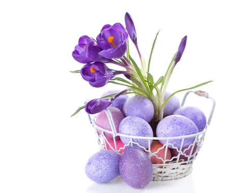 branche: Easter still life with colored eggs and flowers (Crocus) isolated on white background.
