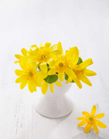 palustris: Bunch of early spring flowers ( Caltha palustris) in stand for boiled egg on the white wooden plank. Easter decor.
