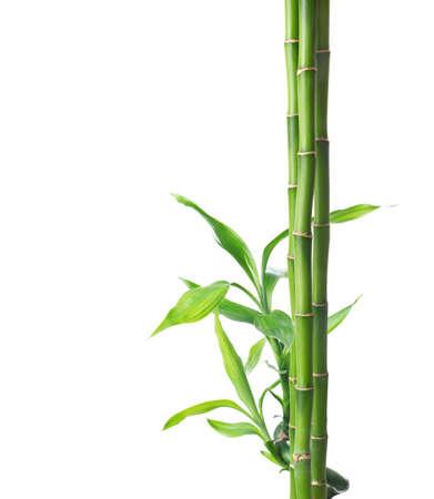 Takken van bamboe geïsoleerd op een witte achtergrond.