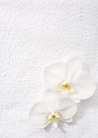 terrycloth: Two  orchids   lying on white terry towel.  View from above. Spa concept.