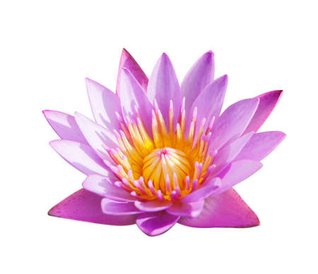 beautiful flowers: Lotus flower isolated on white background.