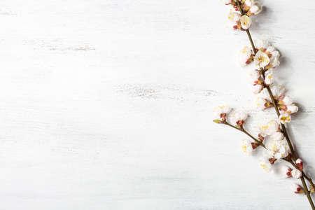 꽃이 만발한 살구의 가지와 함께 오래된 나무 초라한 배경
