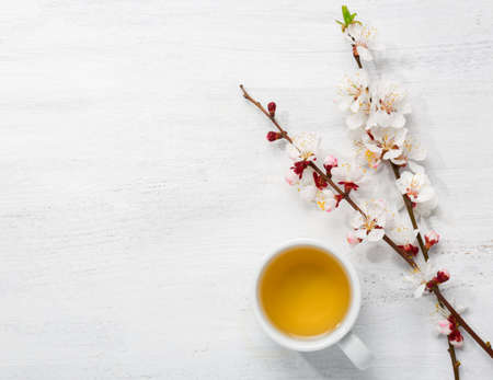 Cup of green tea and  branches of blossoming apricot  on  old wooden shabby background Stock Photo