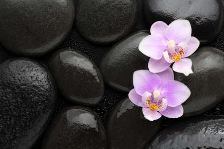black stones: Two  light pink  orchids  lying on wet black stones. Viewed from above. Spa concept.
