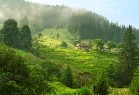 Beautiful summer morning in Carpathian Mountains (near Verkhovyna) , Ukraine.