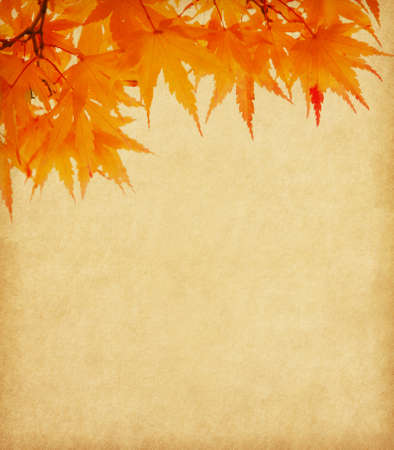 Old paper with orange autumn leaves Stock Photo