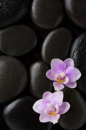 Two  light pink  orchids  lying on wet black stones. Flat lay