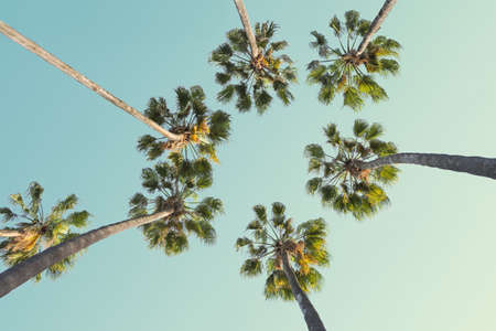 Tropical palm trees on clear summer sky background. Low Angle View. Toned image Stock Photo