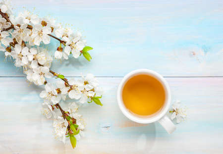 Cup of tea and branches of blossoming apricot on old light blue wooden table. Imagens
