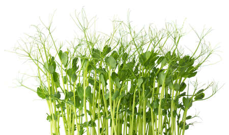 Fresh microgreens of Peas isolated on white background. Imagens