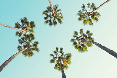 Tropical palm trees on clear summer sky background.  Toned image.