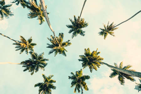 Summer tropical background with Coconut palms  on  blue sky. Toned image. Imagens