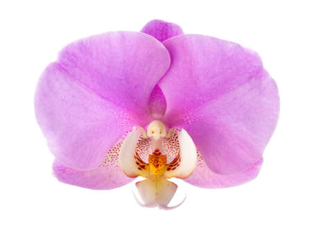 Close-up of  pink Orchid flower isolated on white background.