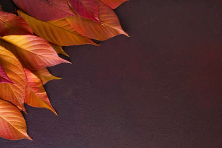 Ð¡olorful autumn leaves of Cherry on  wooden table of  red-brown color.