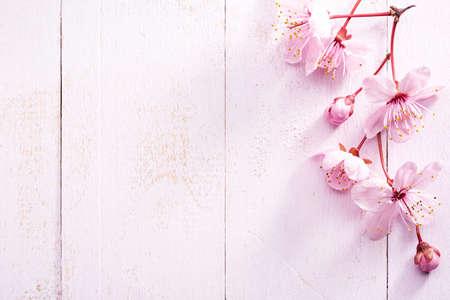 Flowers of Sakura on light pink shabby wooden board.  Top view. Reklamní fotografie