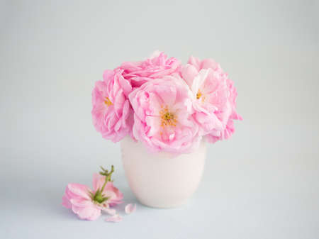 Bouquet of  pale pink Roses in white ceramic vase against  of light grey background.  Tea Roses.  Shallow depth of field. Selective focus. 免版税图像