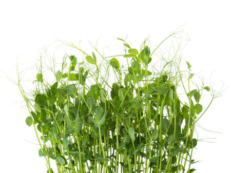 Fresh microgreens of Peas isolated on white background. 免版税图像