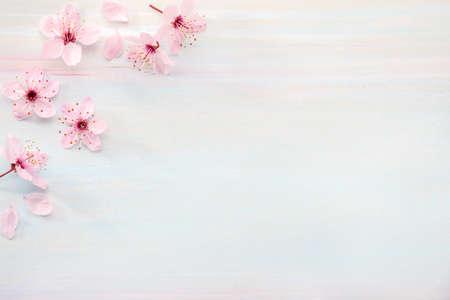 Flowers of Sakura on wooden board. Flat lay. 免版税图像