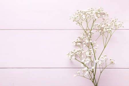 Few twigs of Gypsophila flowers lay on light pink wooden background.  Top view with copy space. Flat lay