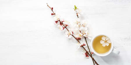 Cup of tea and branches of blossoming Apricot on white shabby wooden table.Top view with copy space. Flat lay