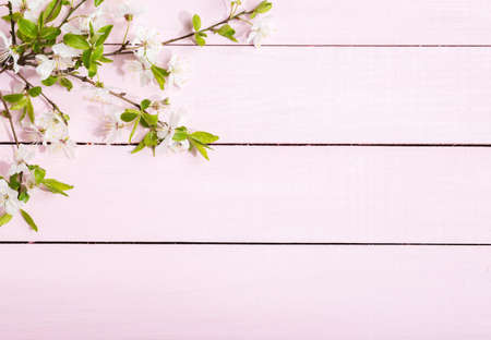 Flowering Cherry branches with green leaves on light pink  wooden board.  Top view with copy space. Flat lay
