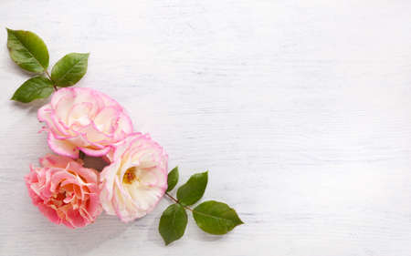 Three  Roses with leaves on a  shabby wooden table. Flat lay.