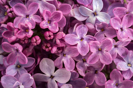 Floral background of tiny flowers of Lilac. Flat lay. Selective focus.