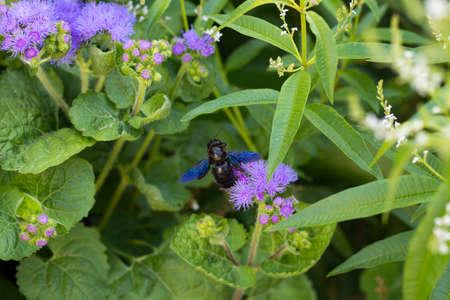 hyles: Moth on Flowers